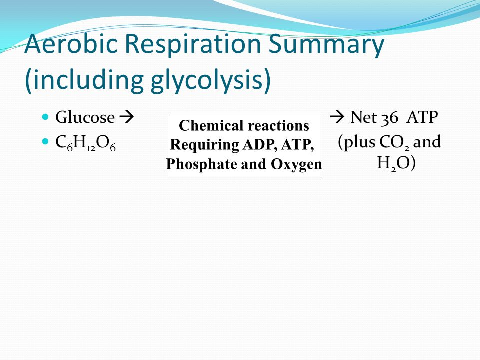 Aerobic Respiration Summary (including glycolysis)