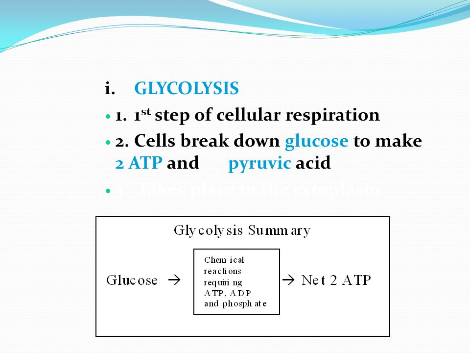 i. GLYCOLYSIS 1. 1st step of cellular respiration. 2. Cells break down glucose to make 2 ATP and pyruvic acid.