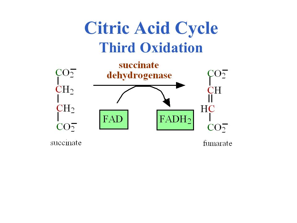 Citric Acid Cycle Third Oxidation