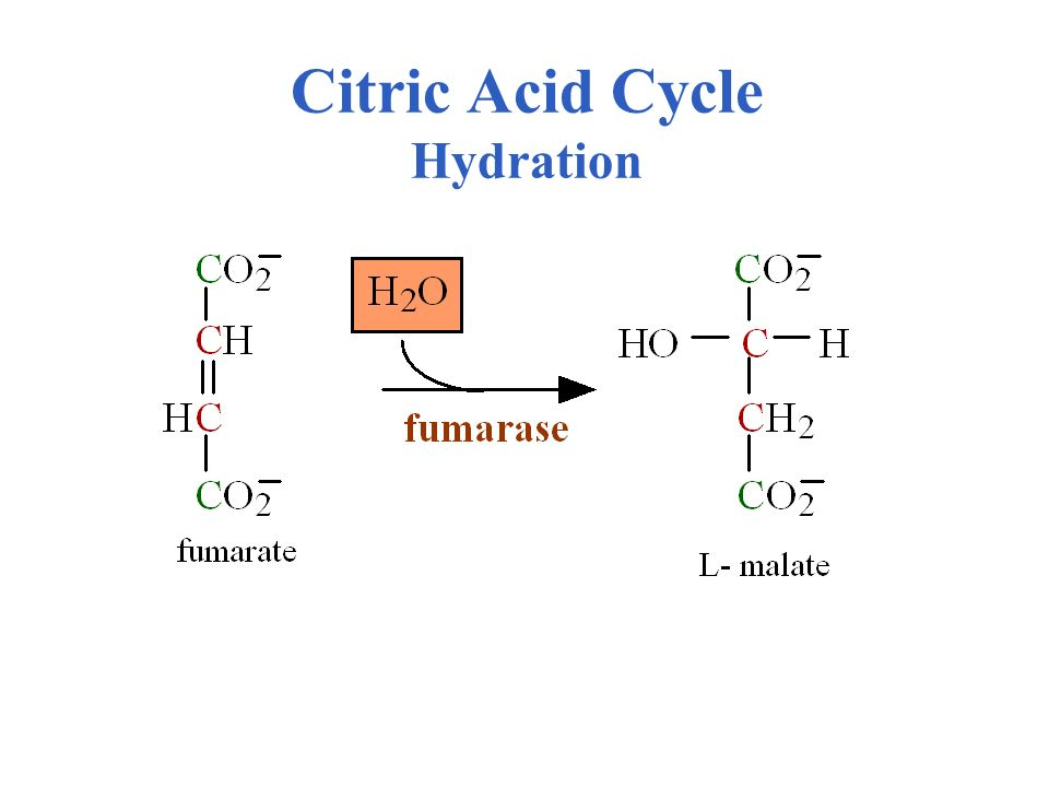 Citric Acid Cycle Hydration