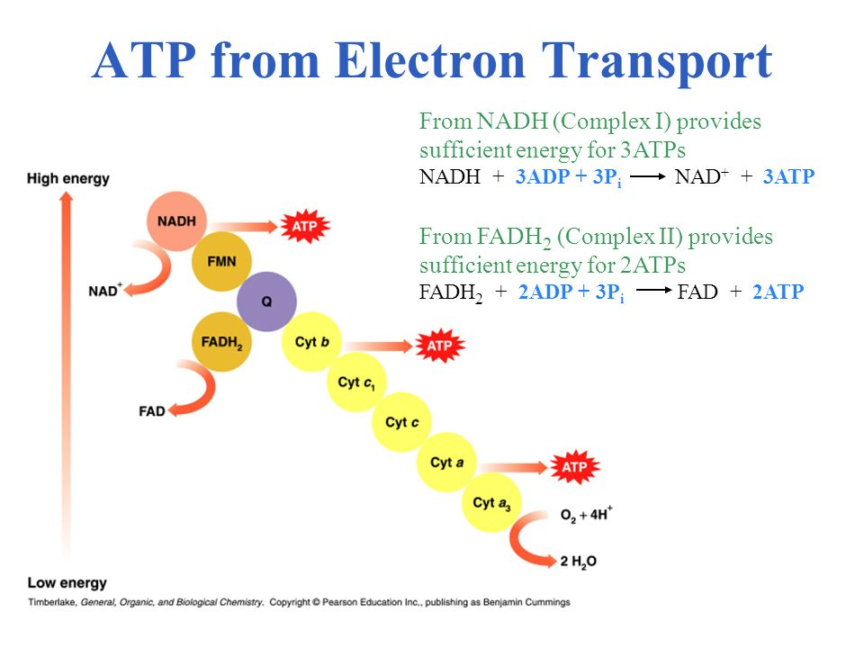 ATP from Electron Transport