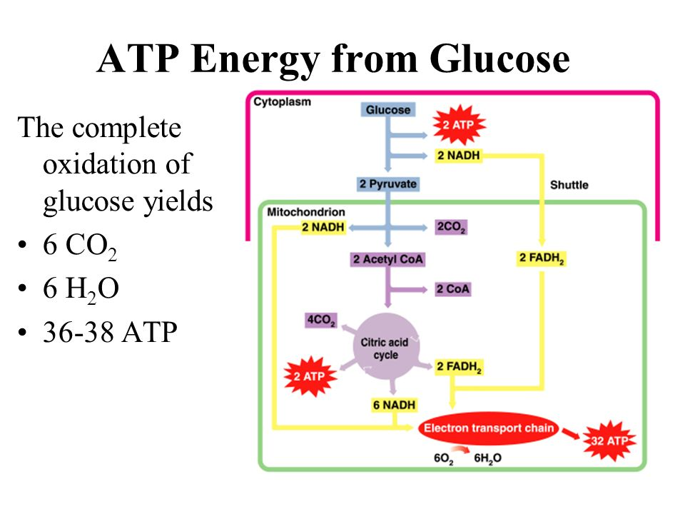 ATP Energy from Glucose