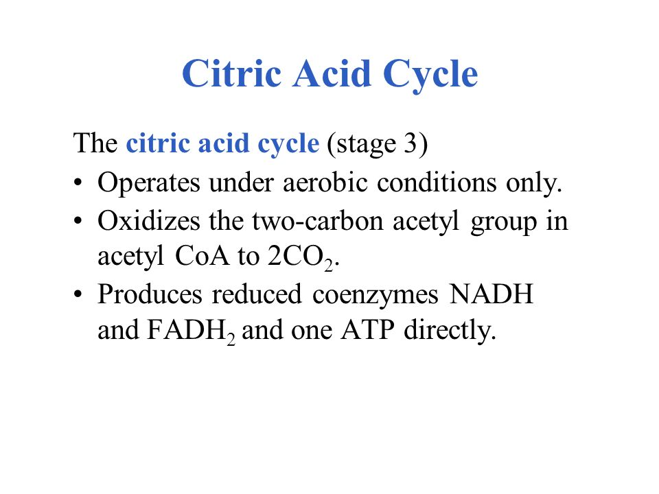 Citric Acid Cycle The citric acid cycle (stage 3)