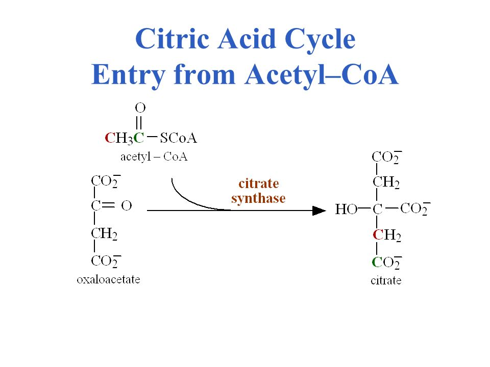 Citric Acid Cycle Entry from Acetyl–CoA
