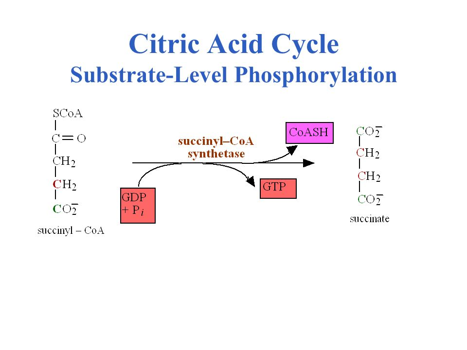 Citric Acid Cycle Substrate-Level Phosphorylation