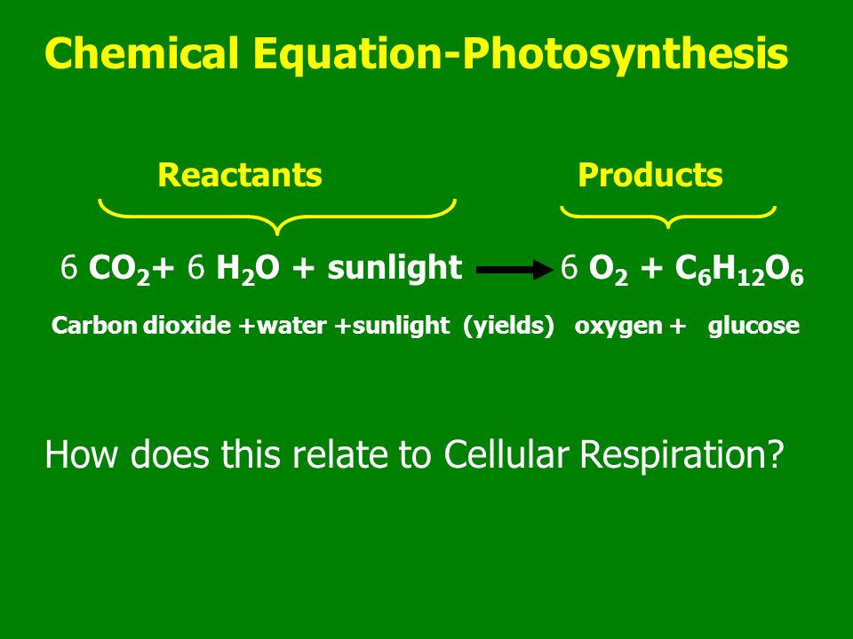 Of equation chemical photosynthesis