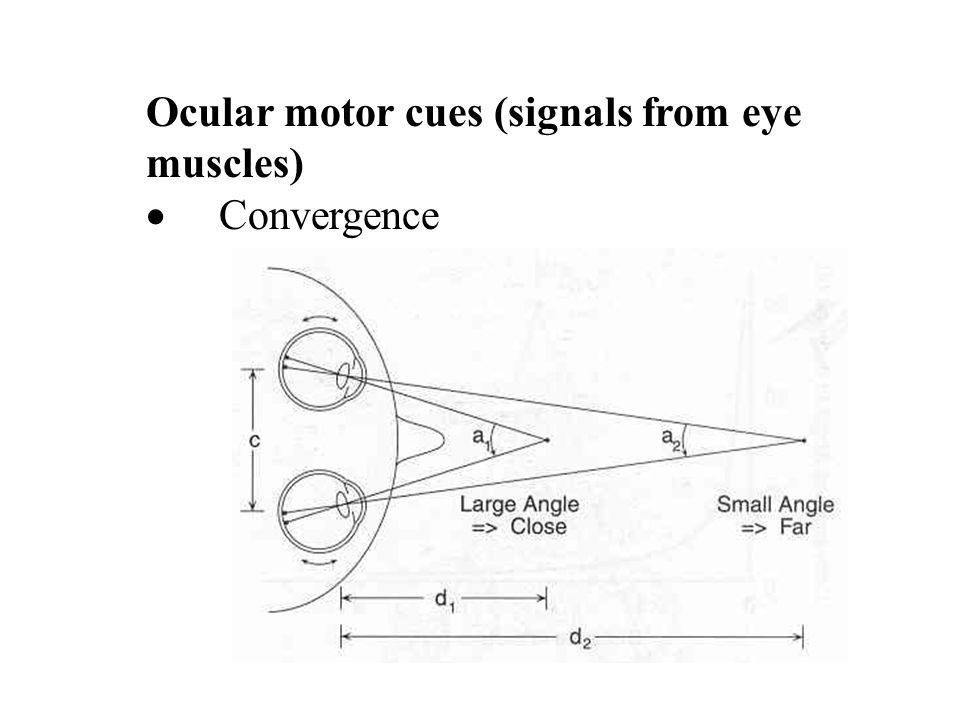 Ocular motor cues (signals from eye muscles)