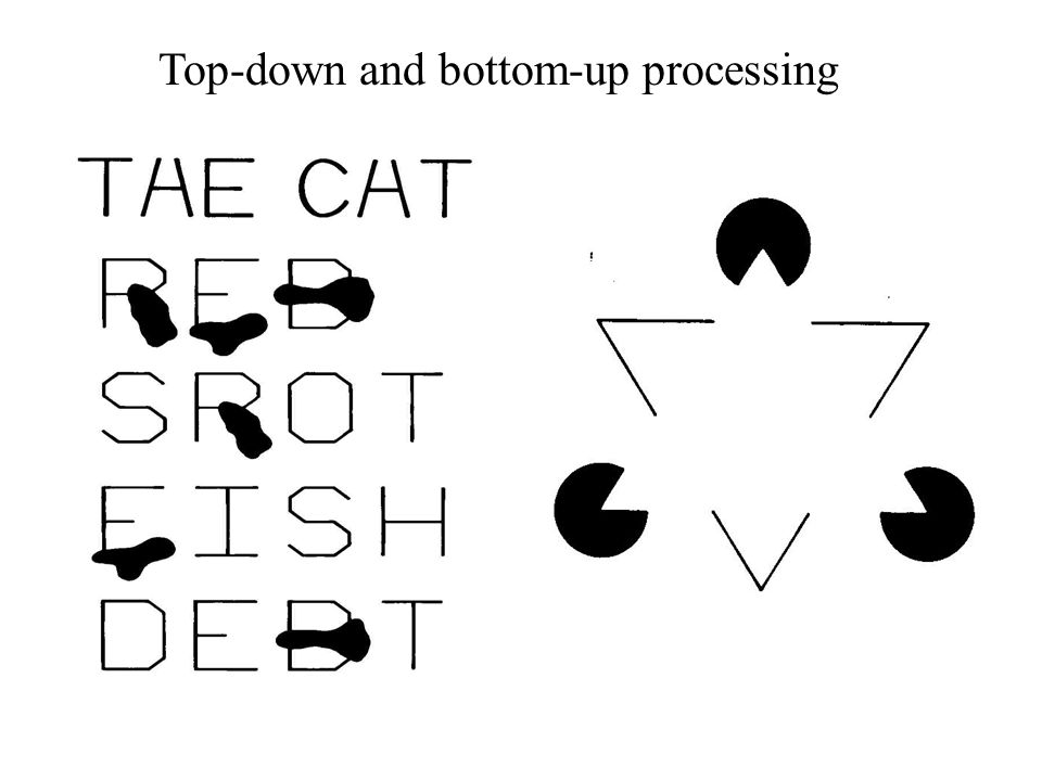 Top-down and bottom-up processing