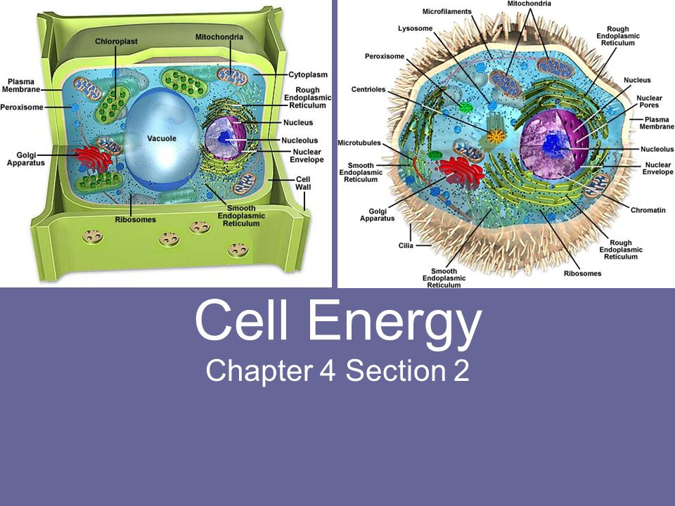 Cell Energy Chapter 4 Section 2