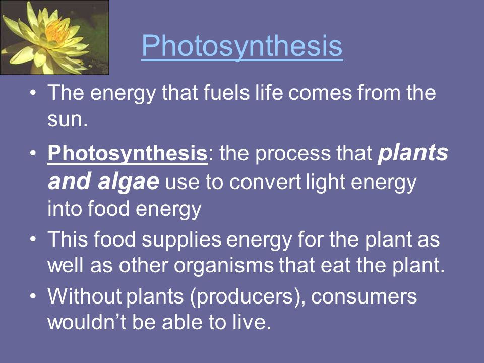 Photosynthesis The energy that fuels life comes from the sun.