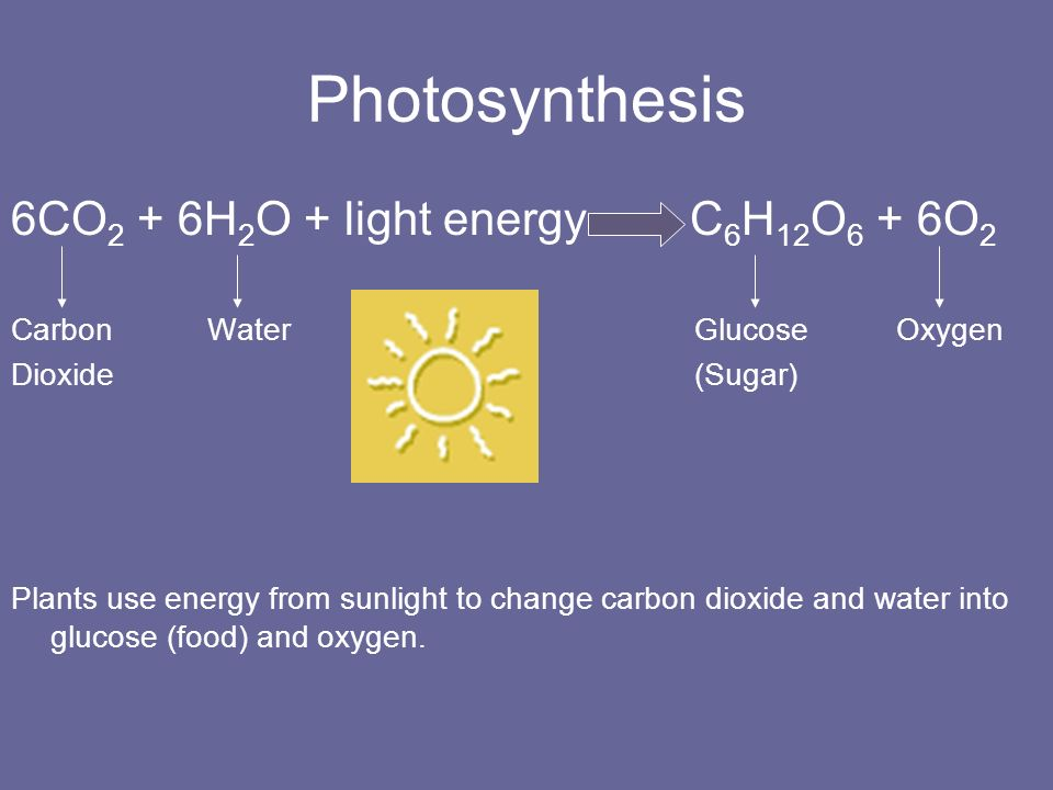 Photosynthesis 6CO2 + 6H2O + light energy C6H12O6 + 6O2