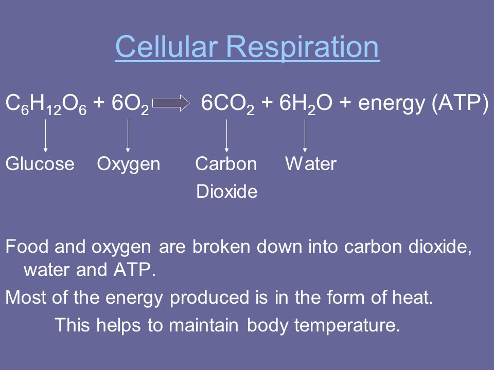 Cellular Respiration C6H12O6 + 6O2 6CO2 + 6H2O + energy (ATP)