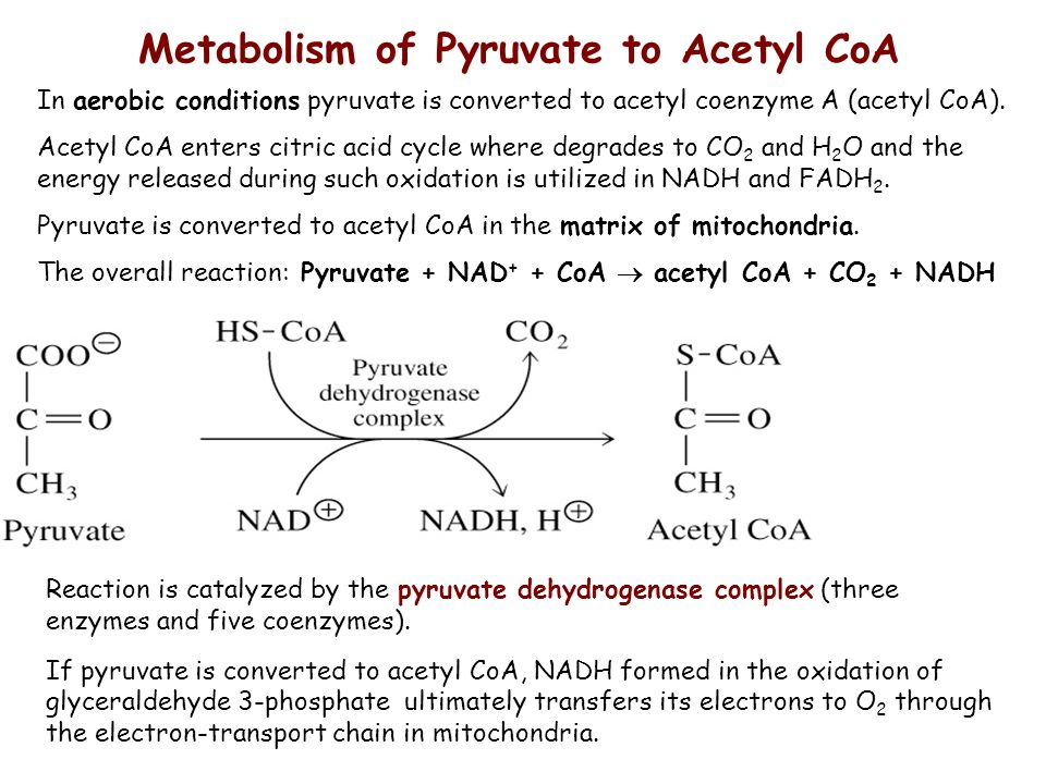 Anaerobic and aerobic oxidation of glucose - ppt video online download