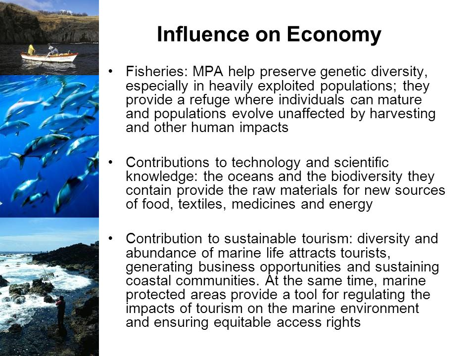 Influence on Economy