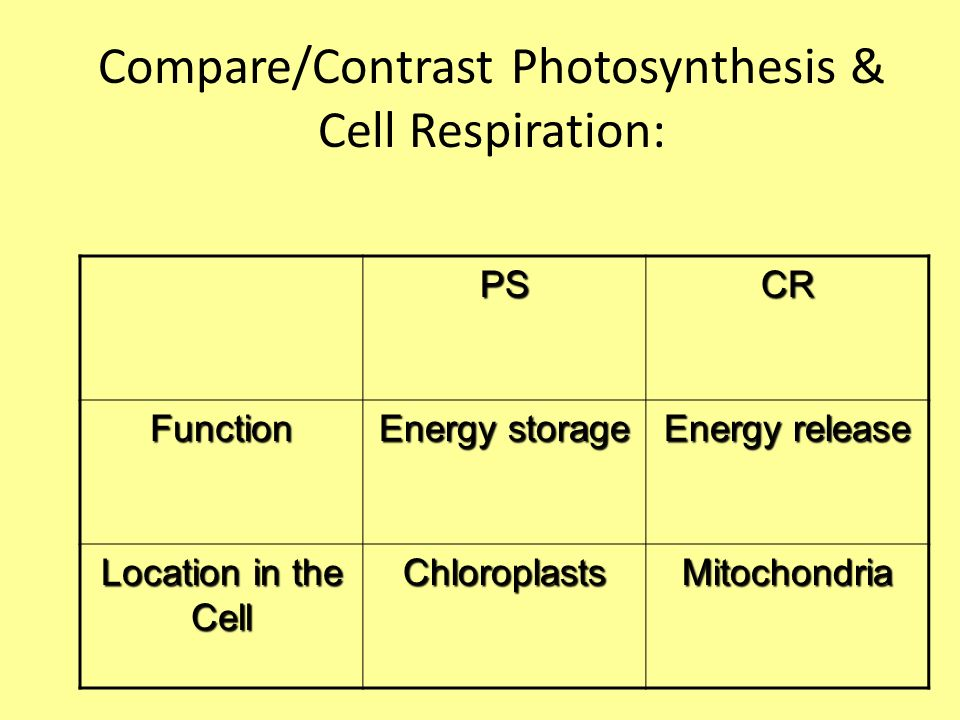 compare contrast photosynthesis respiration essay Cellular photosynthesis and respiration essay sample photosythesis and cellular respiration are both processes in biology which transform energy in one form to another photosythesis is the process in which light energy is converted into chemical energy to produce glucose.