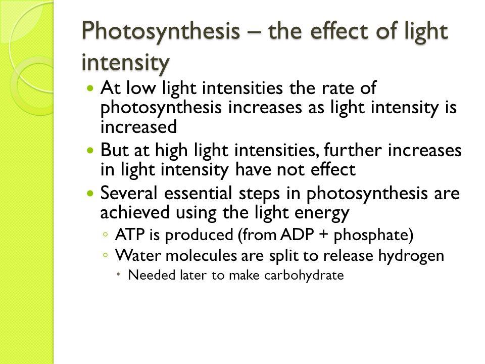 the effect of light intensity on Effect of light intensity and photoperiod on growth of chlorella pyrenoidosa and  co2 biofixation teuku johar gunawan1, yusni ikhwan2,.