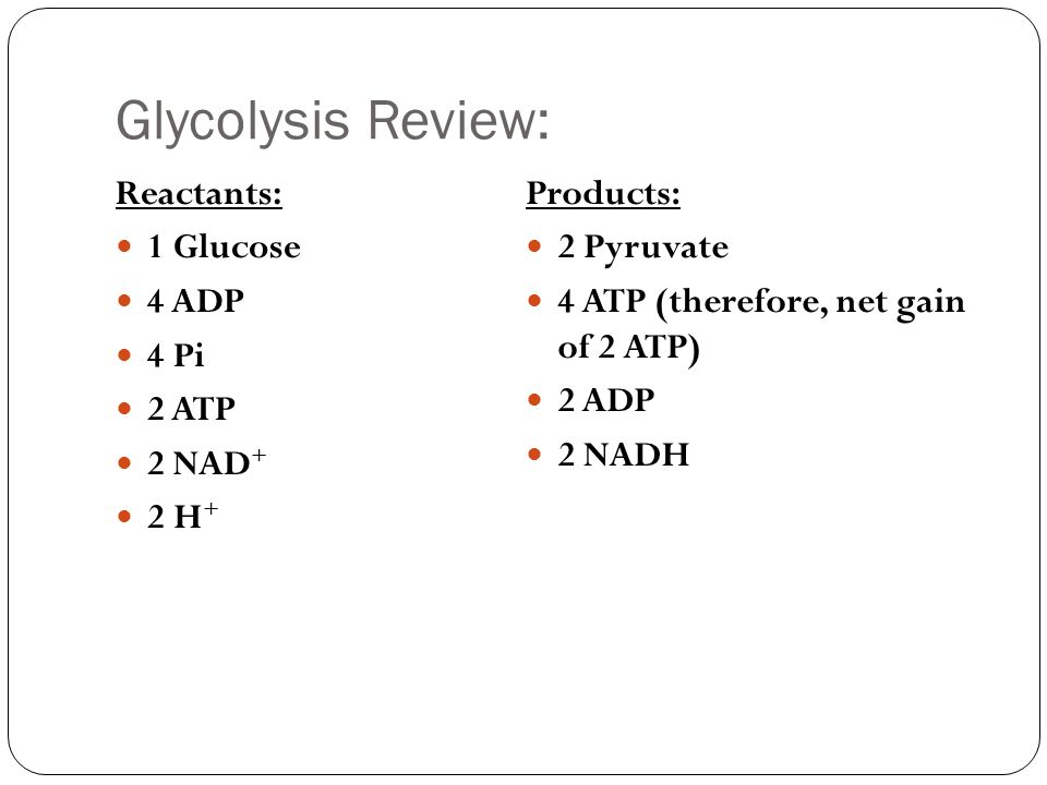 7 1 7 2 Importance Of Cellular Respiration Amp Glycolysis