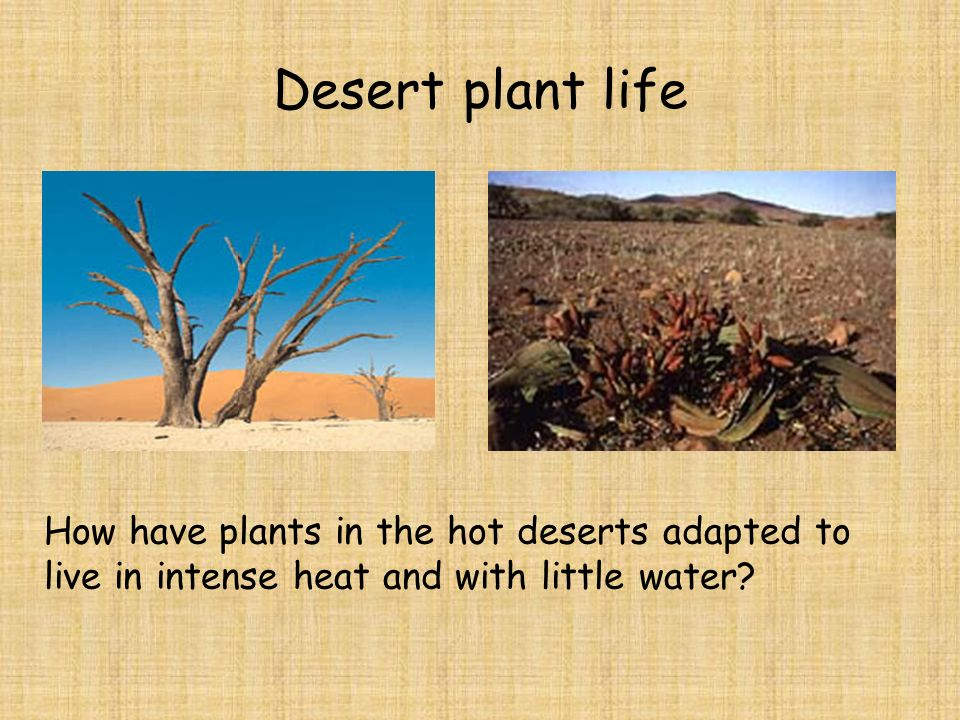 Hot deserts. - ppt video online download