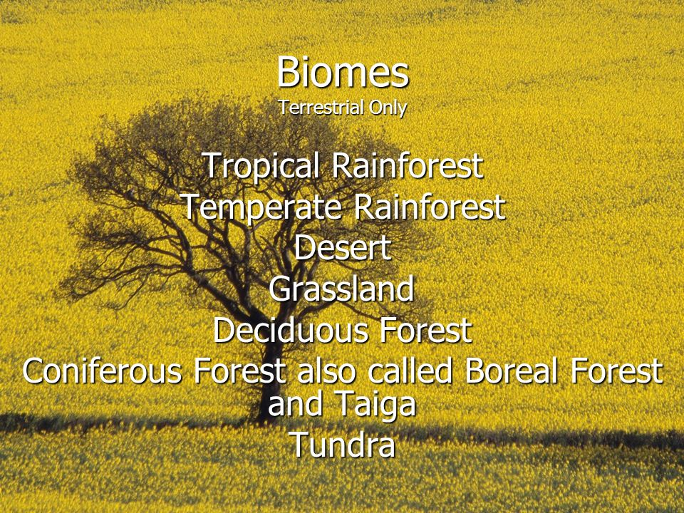 Biomes Terrestrial Only