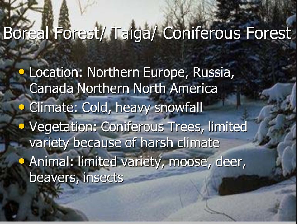 Boreal Forest/ Taiga/ Coniferous Forest