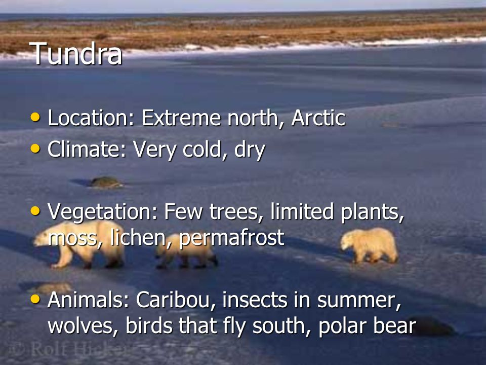 Tundra Location: Extreme north, Arctic Climate: Very cold, dry