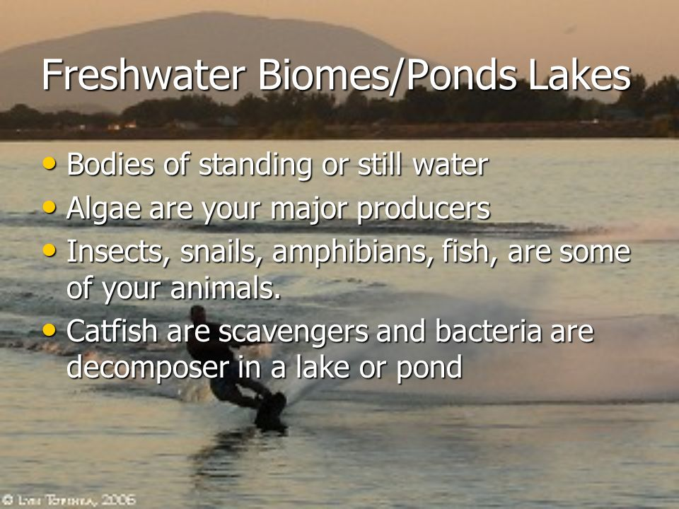 Freshwater Biomes/Ponds Lakes