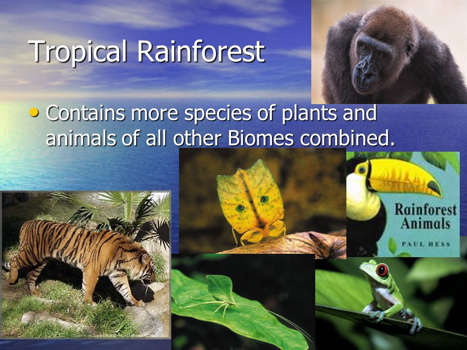 Tropical Rainforest Contains more species of plants and animals of all other Biomes combined.