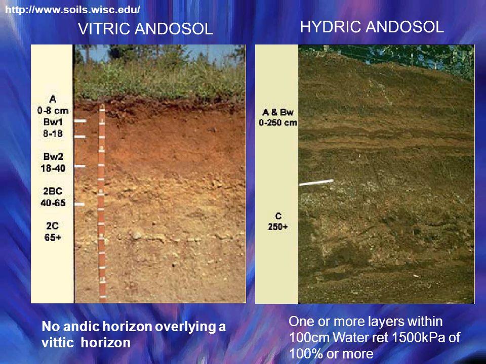 HYDRIC ANDOSOL VITRIC ANDOSOL