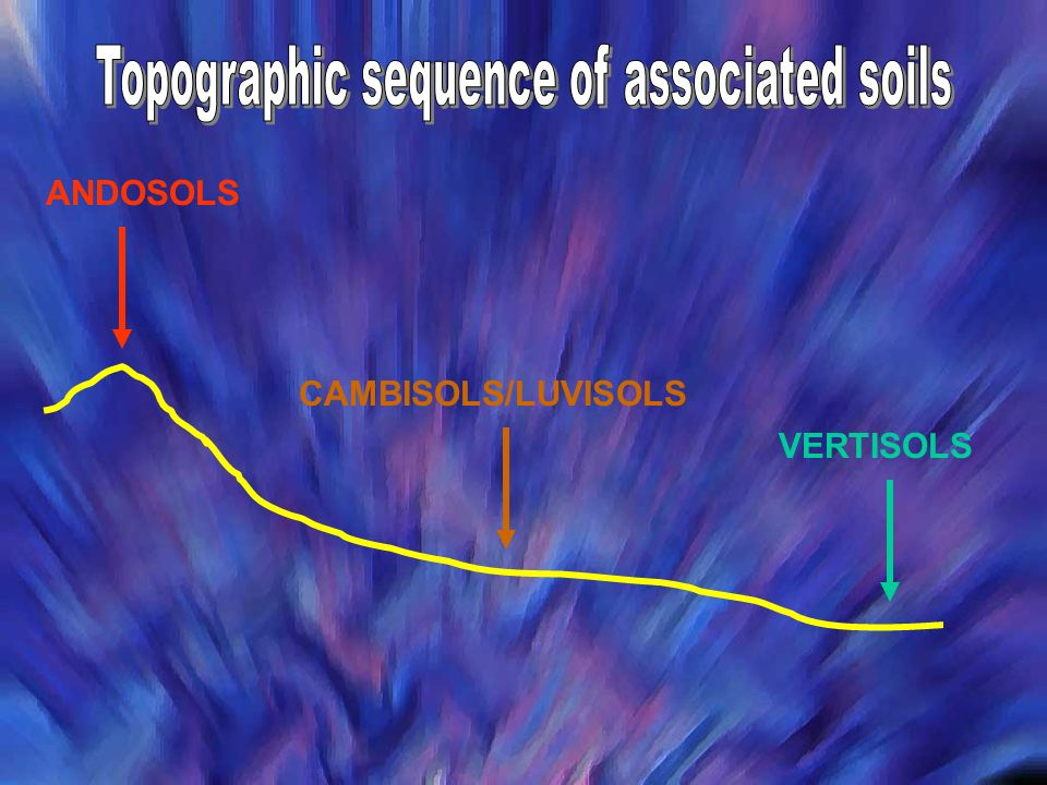 Topographic sequence of associated soils