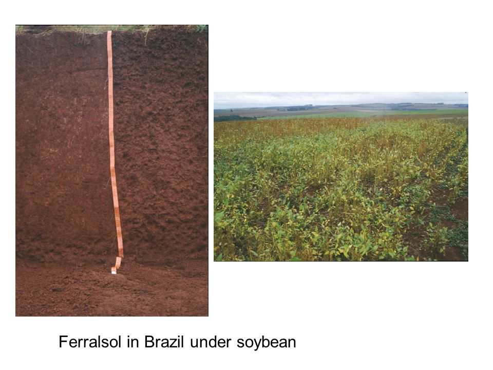 Ferralsol in Brazil under soybean