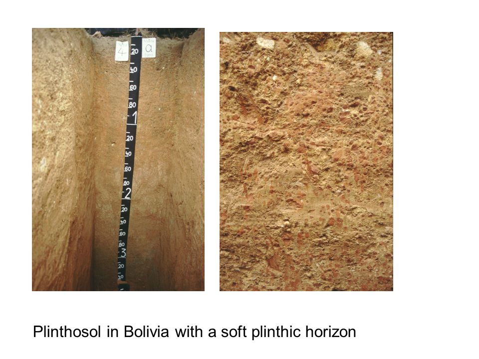 Plinthosol in Bolivia with a soft plinthic horizon