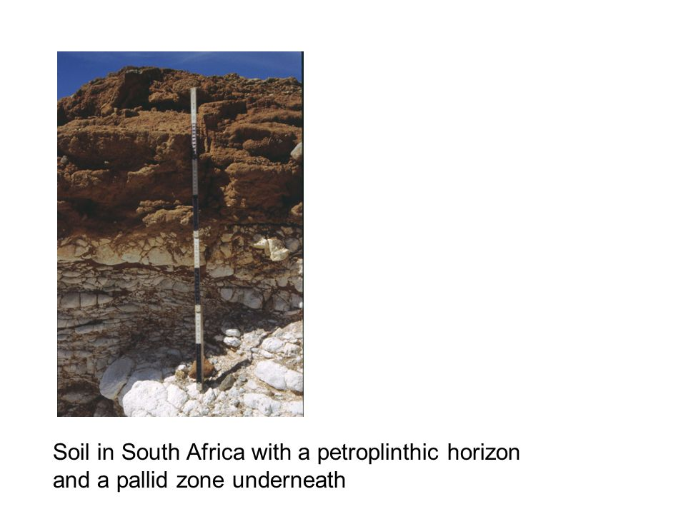Soil in South Africa with a petroplinthic horizon