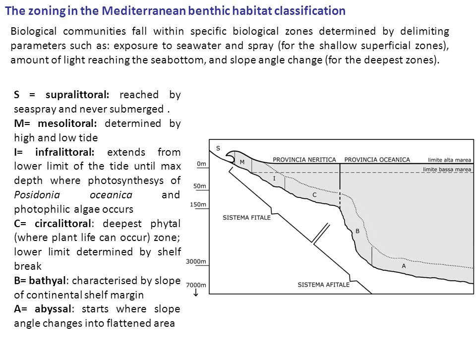 The zoning in the Mediterranean benthic habitat classification