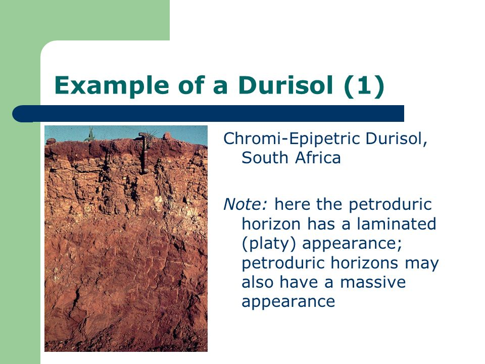 Example of a Durisol (1) Chromi-Epipetric Durisol, South Africa