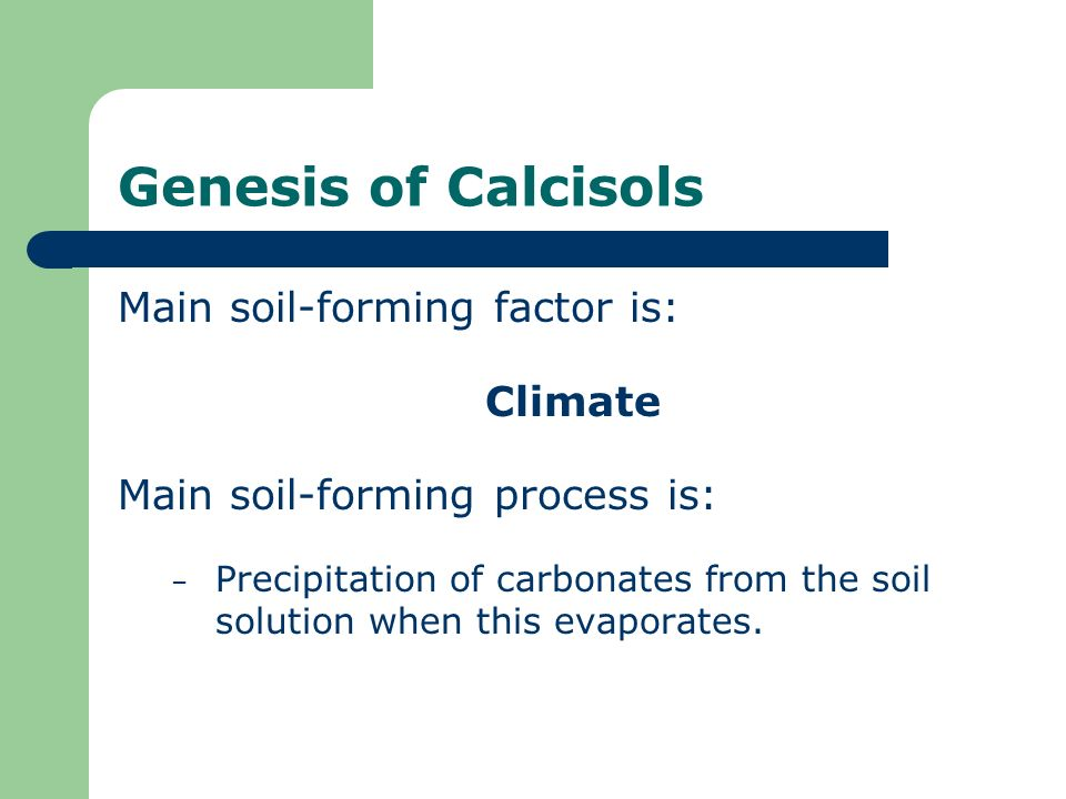 Genesis of Calcisols Main soil-forming factor is: Climate