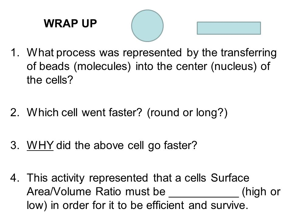 WRAP UP What process was represented by the transferring of beads (molecules) into the center (nucleus) of the cells