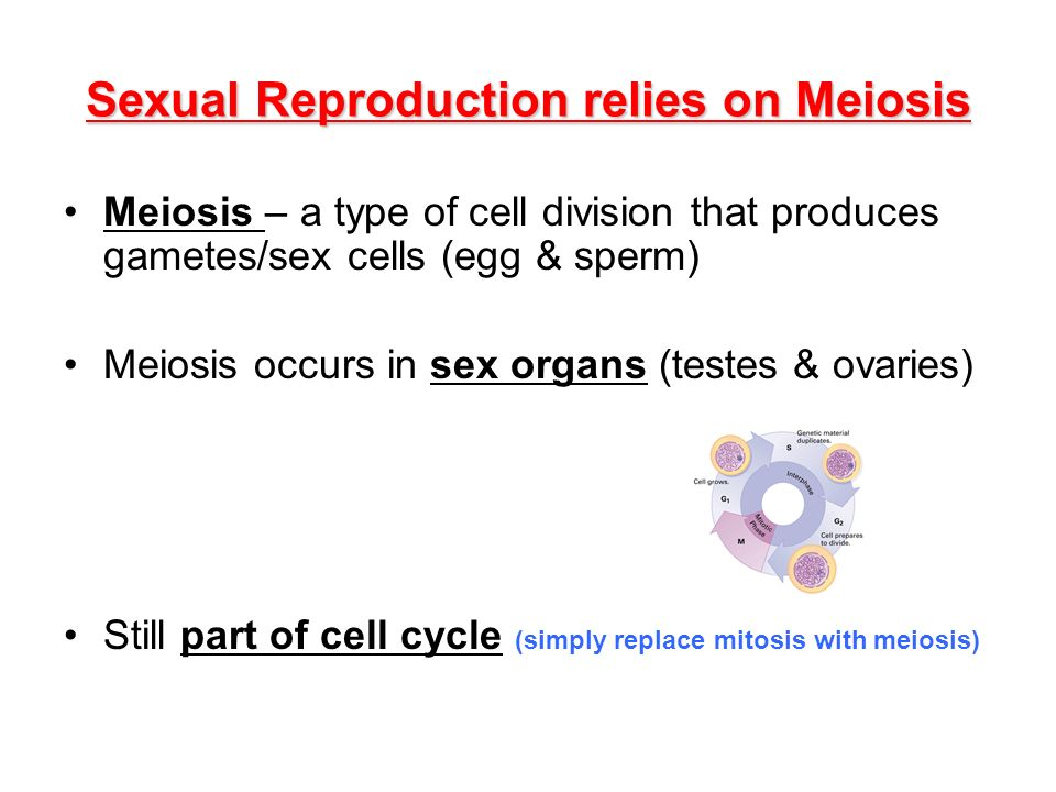 Sexual Reproduction relies on Meiosis