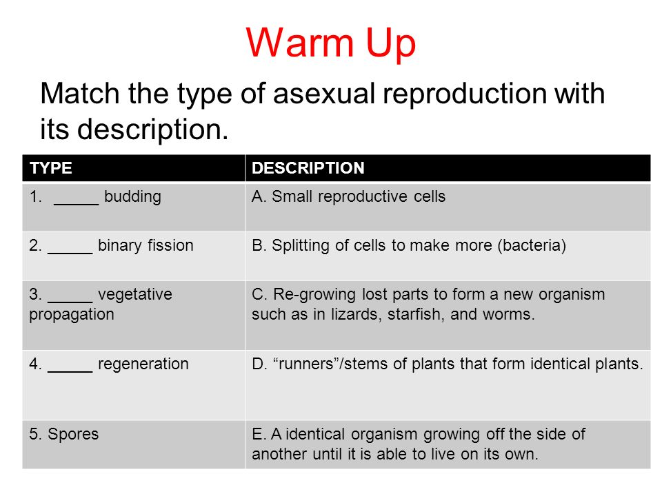 Warm Up Match the type of asexual reproduction with its description.