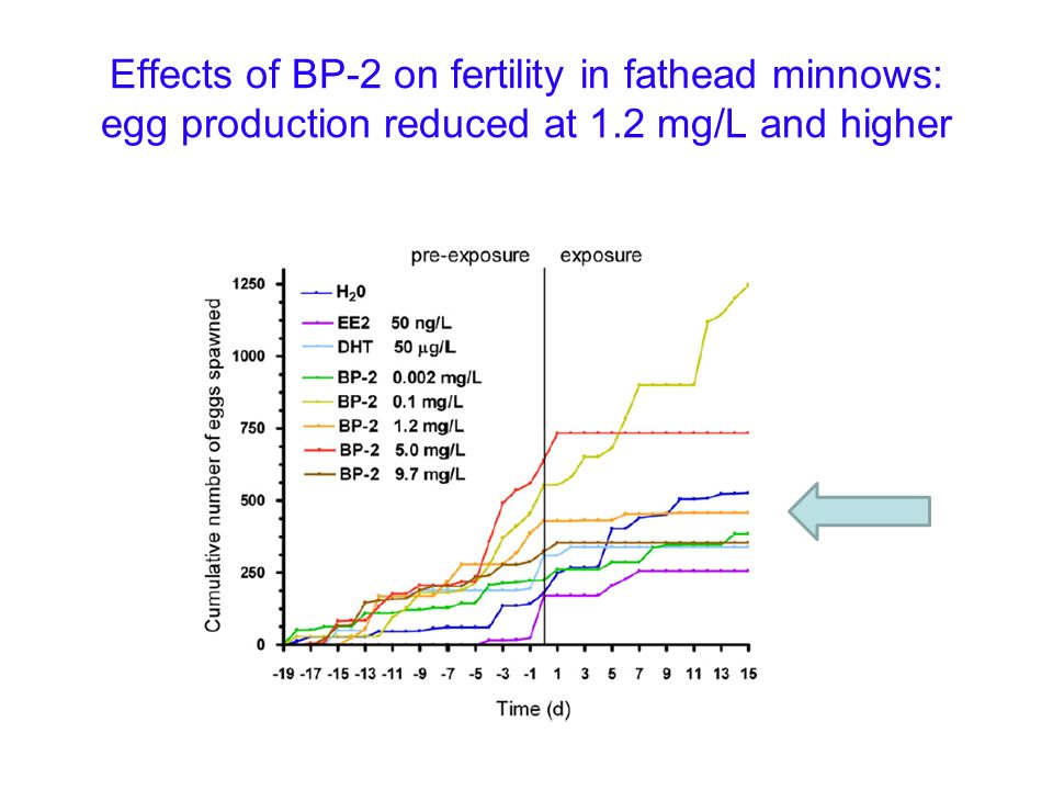 Effects of BP-2 on fertility in fathead minnows: egg production reduced at 1.2 mg/L and higher
