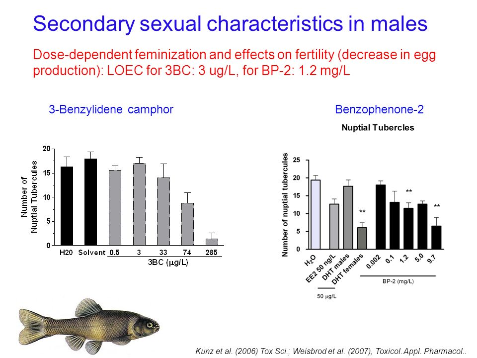 Secondary sexual characteristics in males