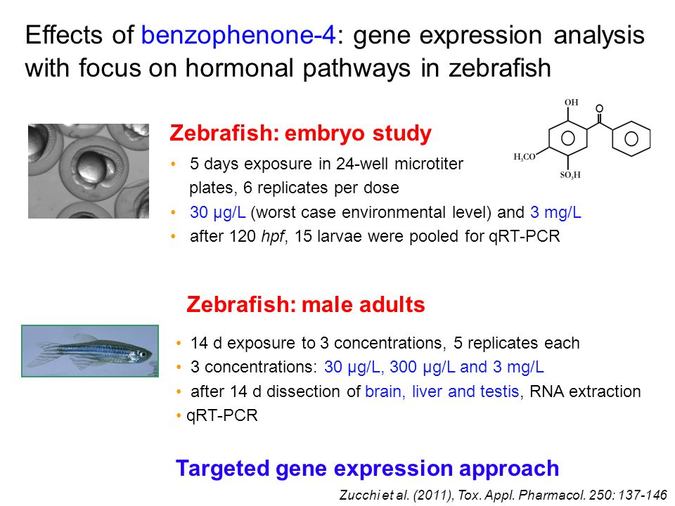 Effects of benzophenone-4: gene expression analysis with focus on hormonal pathways in zebrafish