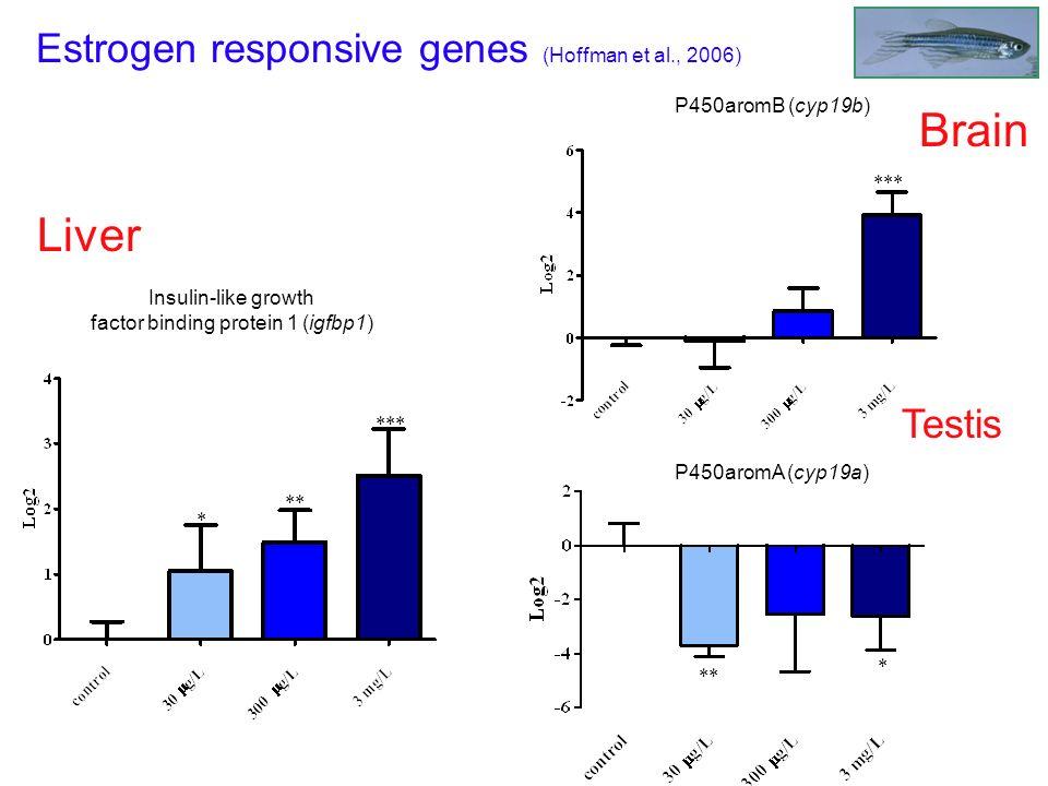 Brain Liver Estrogen responsive genes (Hoffman et al., 2006) Testis
