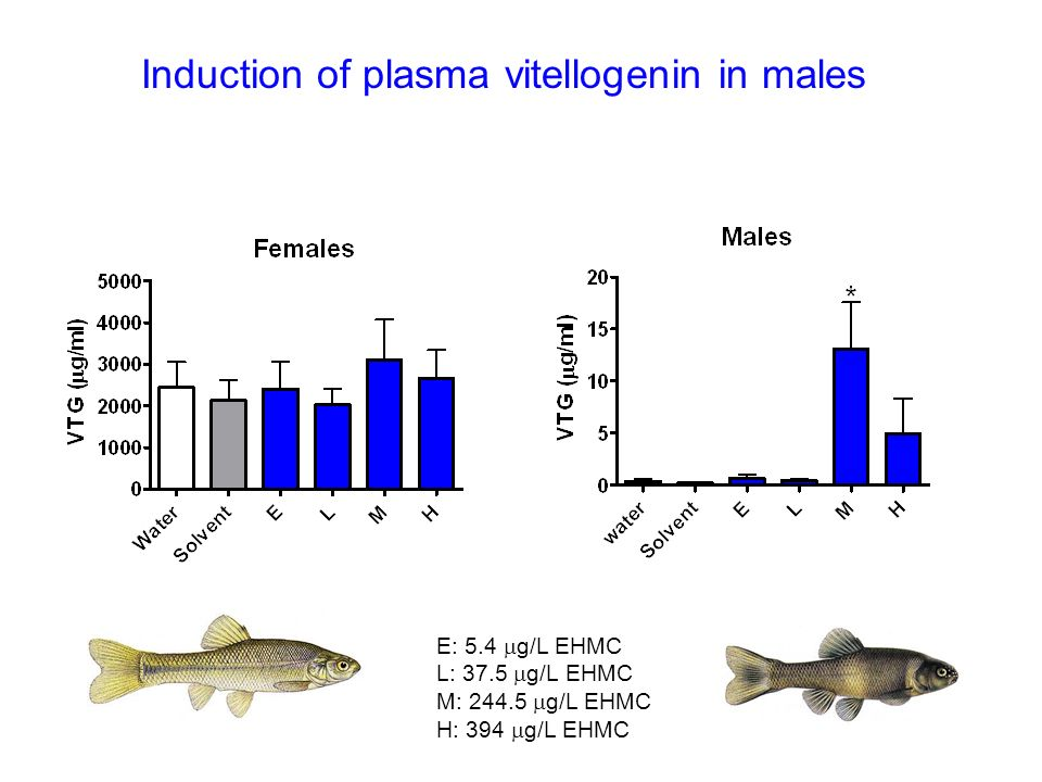 Induction of plasma vitellogenin in males