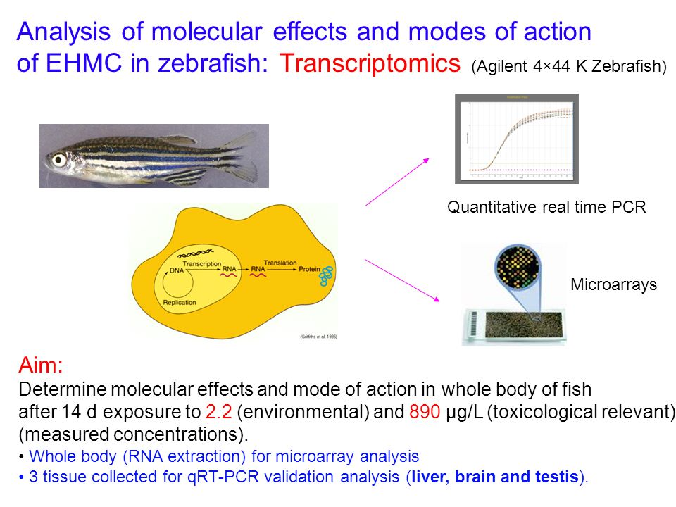 Analysis of molecular effects and modes of action