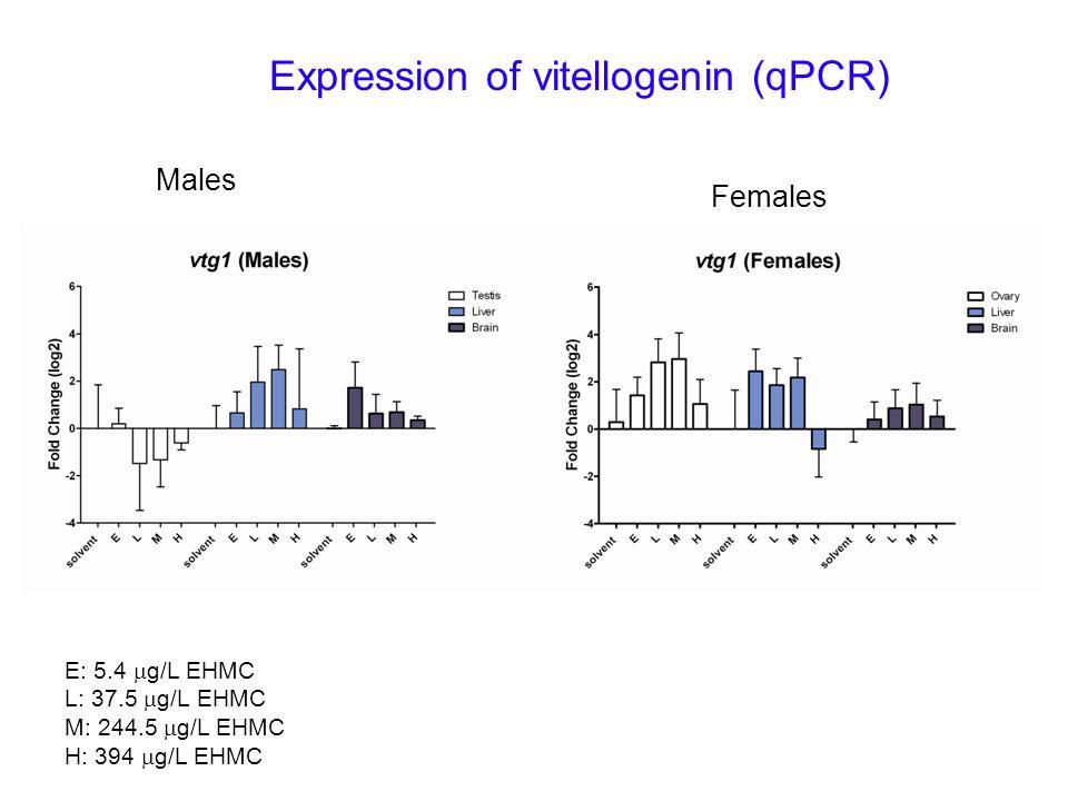 Expression of vitellogenin (qPCR)