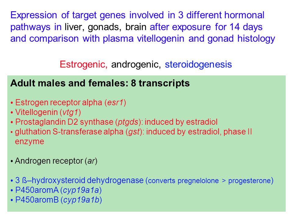 Estrogenic, androgenic, steroidogenesis