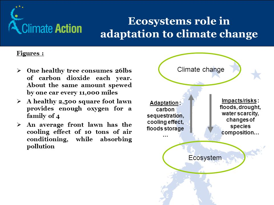 Ecosystems role in adaptation to climate change