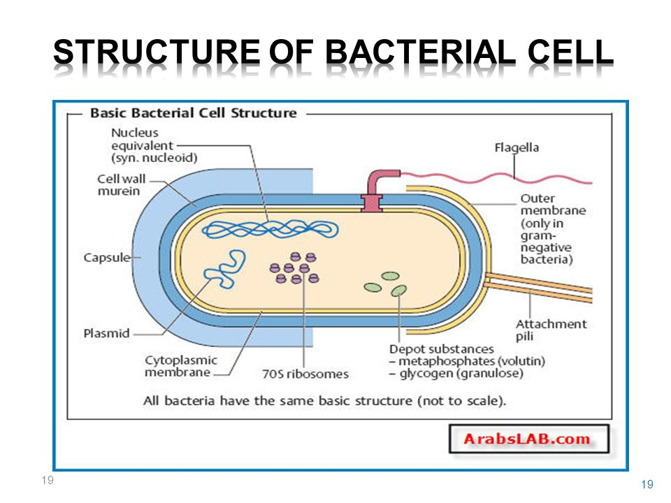 Functional anatomy of prokaryotic cells ppt video online download structure of bacterial cell ccuart Gallery
