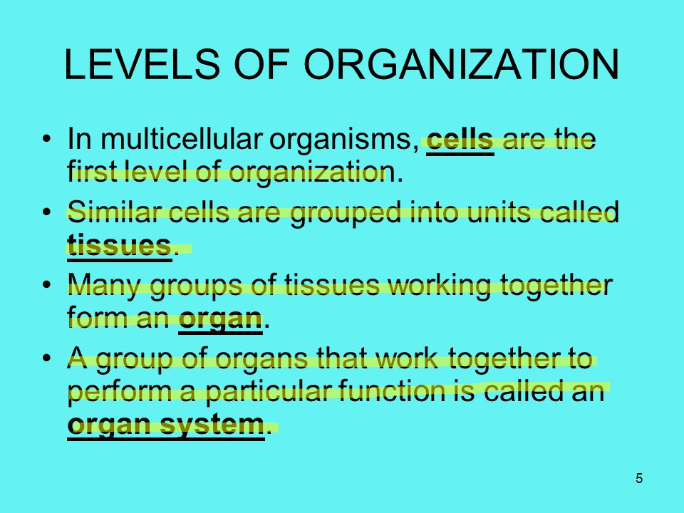 CH.7 CELL STRUCTURE AND FUNCTION. - ppt video online download