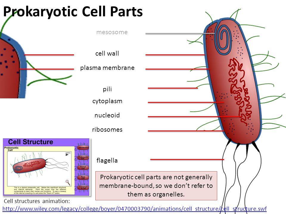 Prokaryotes Stephen Taylor i-Biology.net - ppt video ...  Prokaryotes Ste...